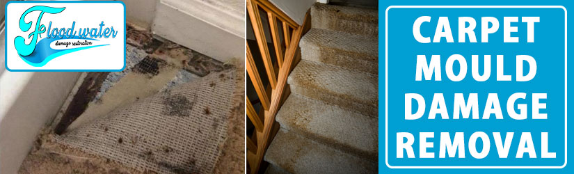 Carpet Mould Damage Removal Perth