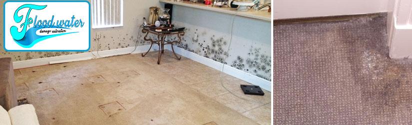 Carpet Mould Treatment