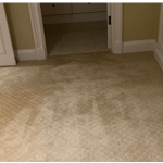 Carpet Mould Treatment and Removal Process
